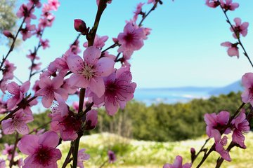 Spring: 20 photos that will put you on a plane to Lefkada
